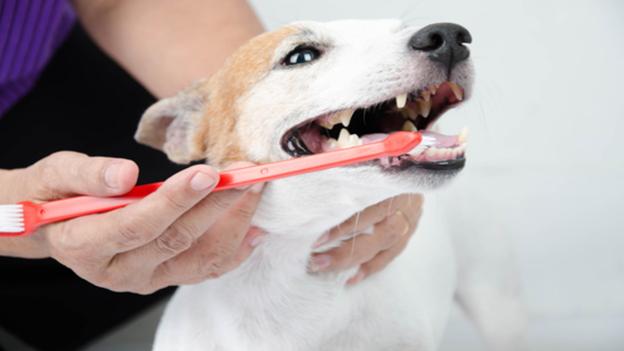 dog dental hygiene tips from north carrollton veterinary hospital in texas