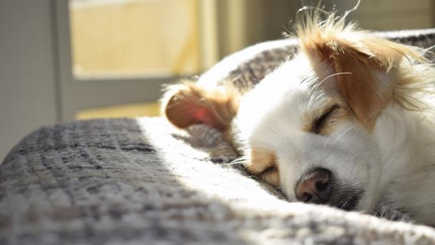 what to do if dog has heatstroke
